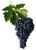 Neronet víno - hrozen