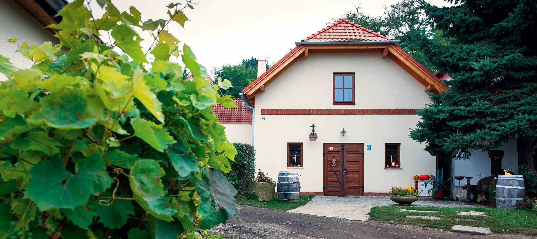 Vinařství Špalek starý sklep