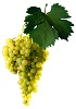 Víno Irsai Oliver - hrozen