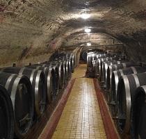 Vína Ampelos zrají také v klasických dřevěných sudech v pískovcovém sklepě
