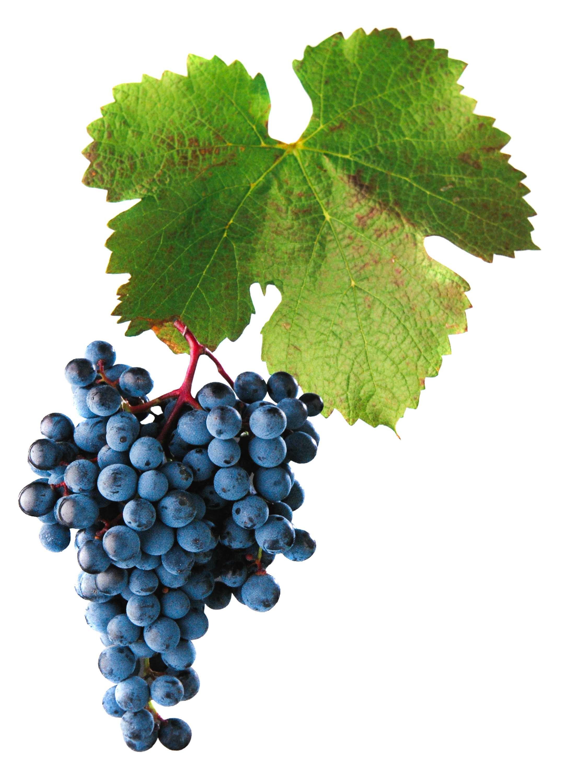 Alibernet víno hrozen a list