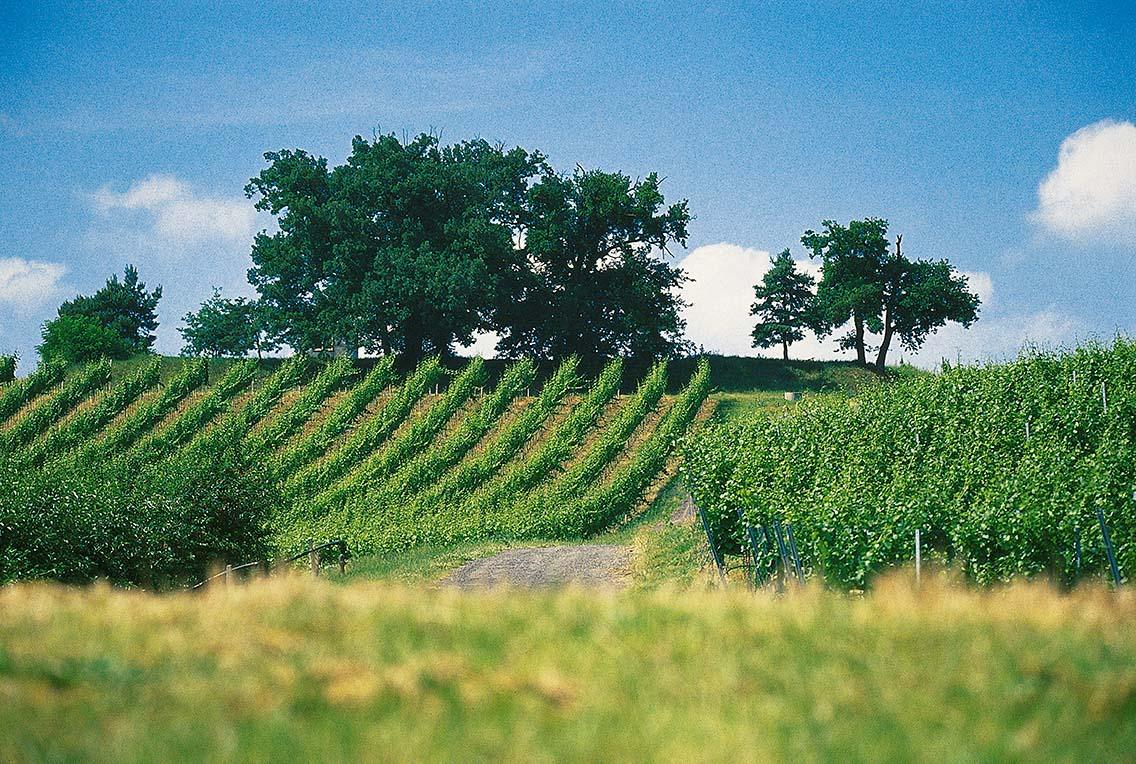 Znovín viniční trať Tři duby