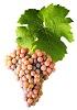 Víno Pálava - hrozen
