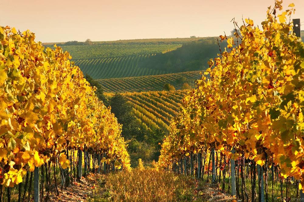 Víno na prodej z vinařství Vinice Hnanice