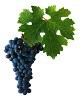 Víno Cabernet Sauvignon máme skladem