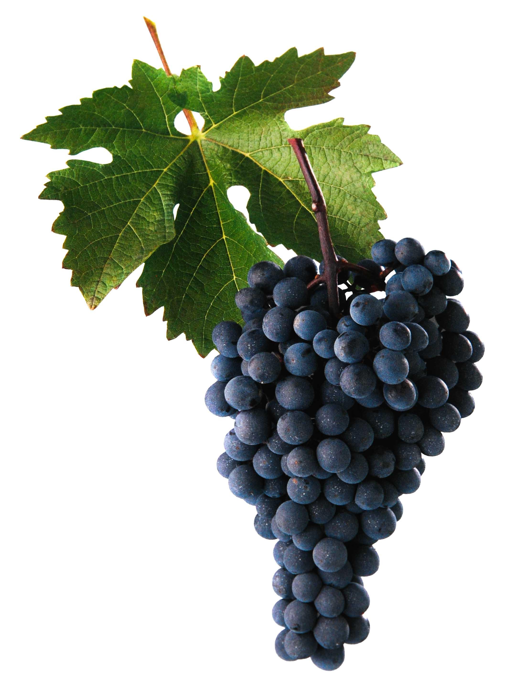 Neronet víno hrozen a list